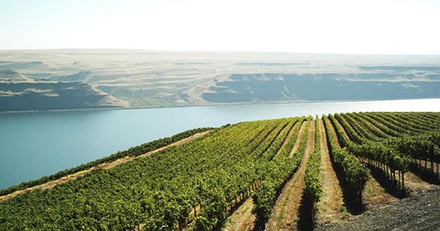 Alder Ridge Vineyard
