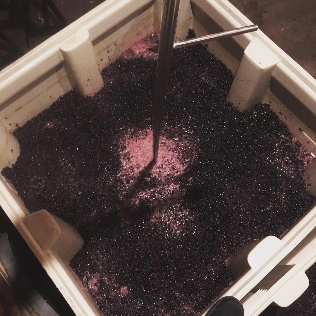 fermenting franc.jpeg