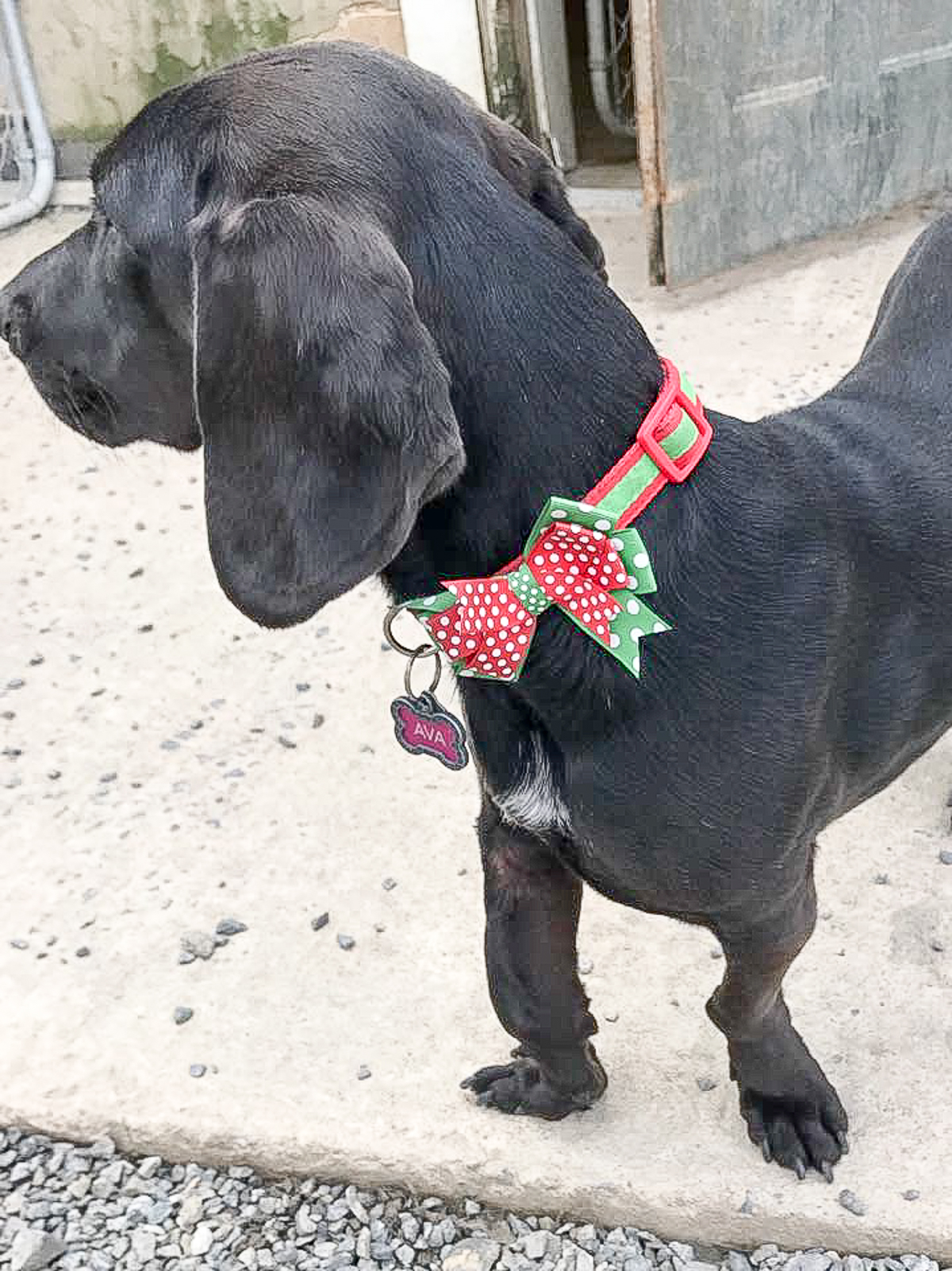 Ava_s holiday collar-13.jpg