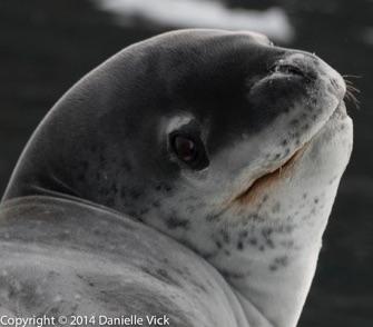 Antarctica-0105.jpg