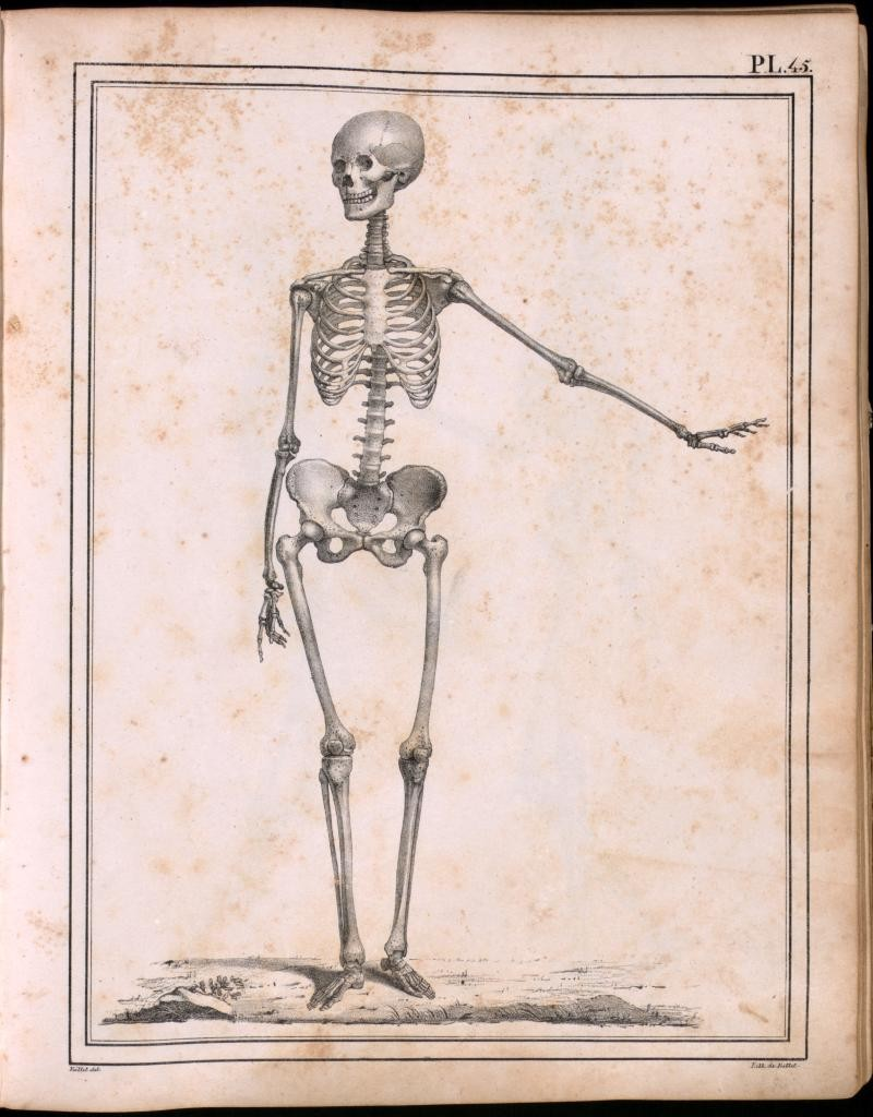skeletongenuvalgus.jpg
