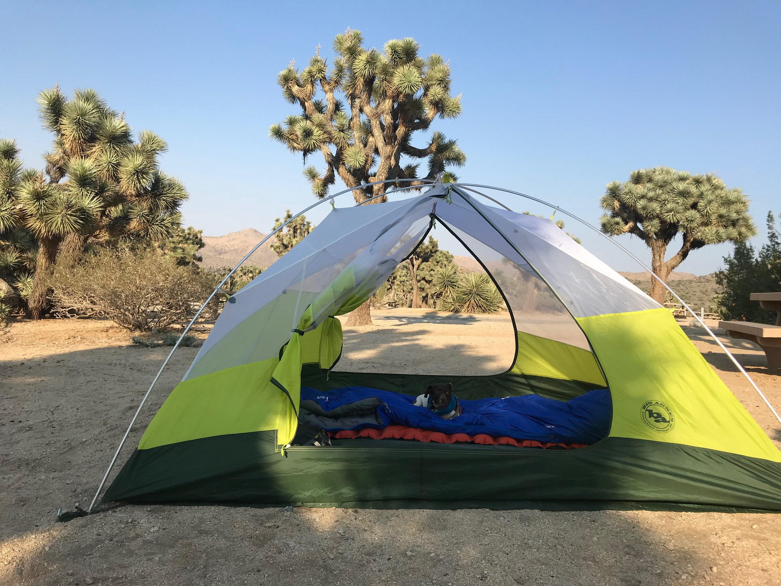 Tents, Joshua Trees and Moo.