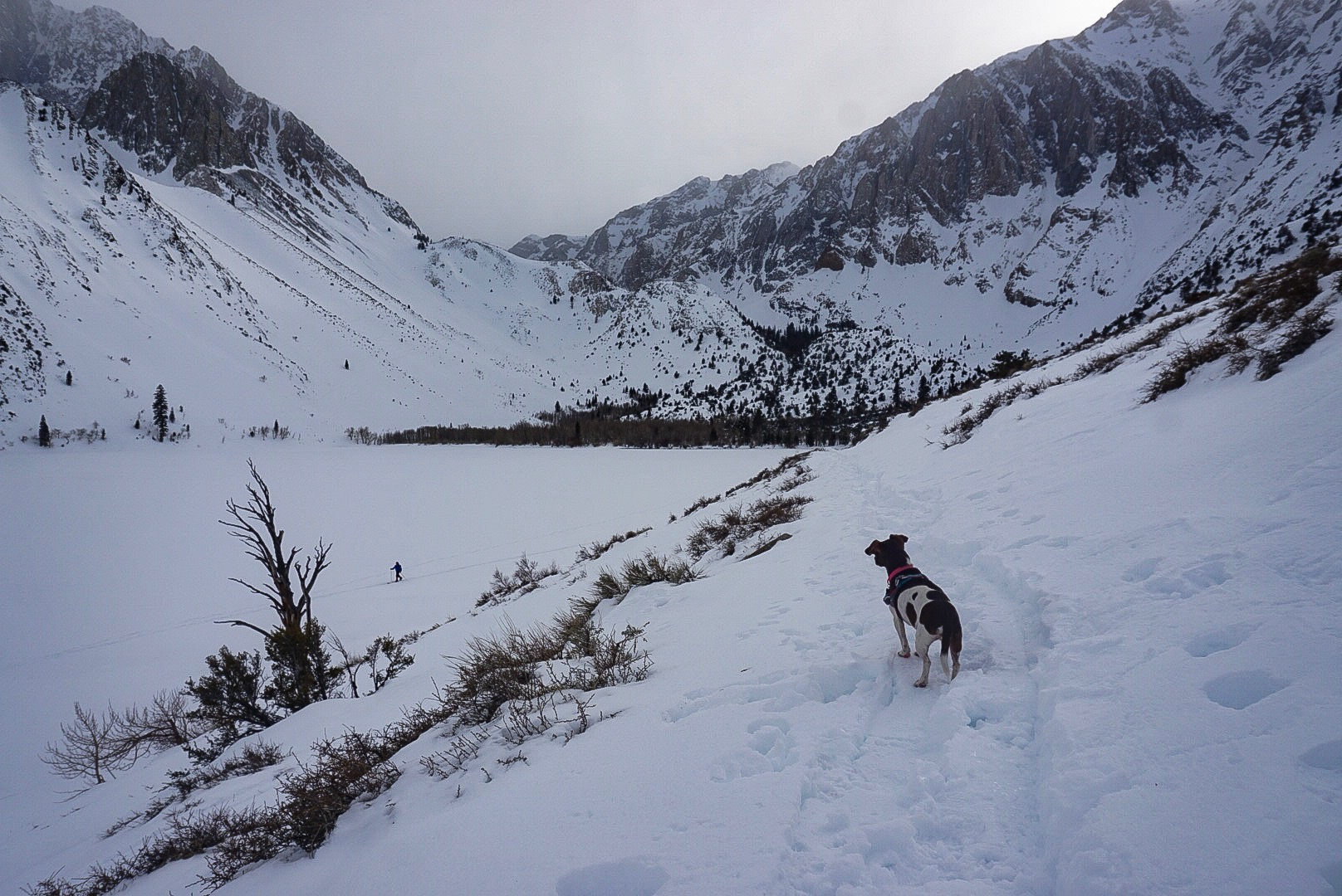 Moo checking out Convict Lake, which is a 2.5 mile beautiful loop a few miles south of Mammoth off the 395. Great for snowshoeing, backcountry skiing and cross country skiing.