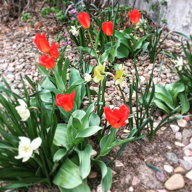 Spring flowers kick ass. #davemyersmusic #spring #springtime #guitardaily #countrymusic #musicianlife #goodthings #flowers