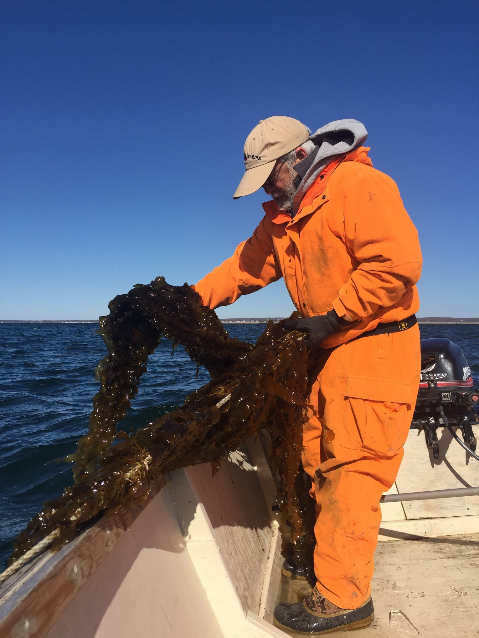 Captain Blaney harvesting kelp off the coast of Point Judith, Rhode Island.