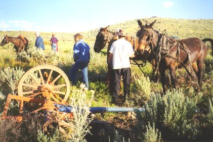Made July 22, 1997 just north of East Canyon Reservoir, East Canyon, Utah. Photograph by Steve Berlin.  When apparently the weight of the wagon they were hitched to overcame this pair of mules on a steep hill, they began to run downhill at top speed spilling the driver, who broke his arm and crashing the wagon box into the hill slightly injuring the passengers. Having broken off the front wheels, axle and tongue the team continued to run until the animals went down in the brush and rocks. Once freed from the wreckage, the mules jumped to their feet, appeared unhurt and and stood quietly. The accident was videotaped by the many domestic and international crews covering the last few days of the trek and the dramatic footage aired around the world.