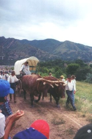 Made July 24, 1997 at This is the Place State Park, Salt Lake City, Utah. Team of Oxen.  Photograph by Steve Berlin.  Wagon and team of oxen enter Salt Lake Valley. Although ox teams were the most common draft animals on the trail in pioneer times, none made the entire trip in the reenactment company.