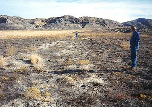 8.   Made 11/22/95, Swale, West Side of Cedar Mountains, UT.  Photograph: Copyright © 1995 Roy D. Tea.   Looking east. In this view, taken on the west side of the Cedar Mountains after a summer fire has burned away the sparse desert vegetation, a shallow swale of the old trail can be seen. Oscar Olson is in the foreground and Vern Gorziztze, 1998 president of Utah Crossroads is in the distance.  Carsonite (a manufacturer's trade name) markers are made from a durable, reinforced plastic material that is flexible, resists weather and may even survive the irresponsible target practice of unscrupulous shooters. Trail identification and marking is a major goal of the Oregon-California Trails Association and Utah Crossroads members, especially Al Mulder, have carefully placed nearly 200 Carsonite markers exactly along the California and Mormon Trail routes in Nevada, Utah and Wyoming. This Carsonite marker is just a few steps from the Fjeldsted grave.