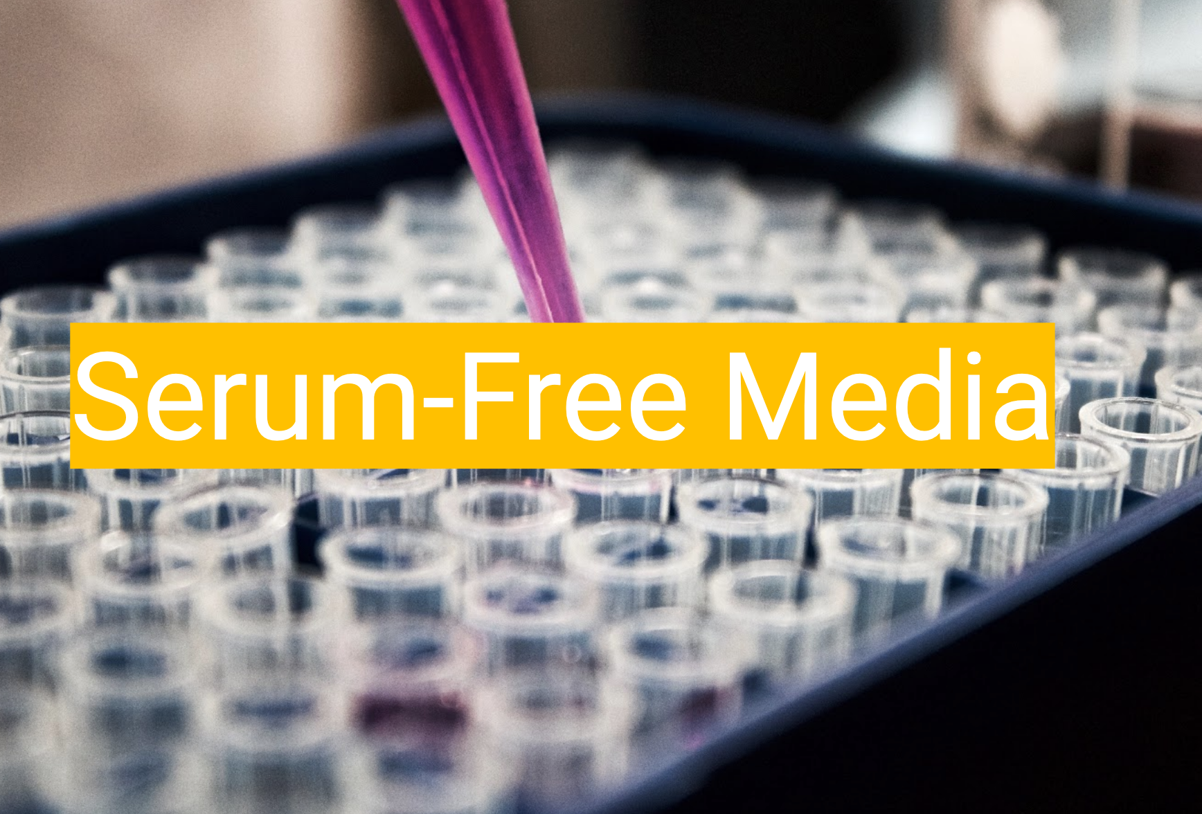 FF-SFM1 - Our first product is a serum-free media to replace FBS-supplemented media for cell growth.