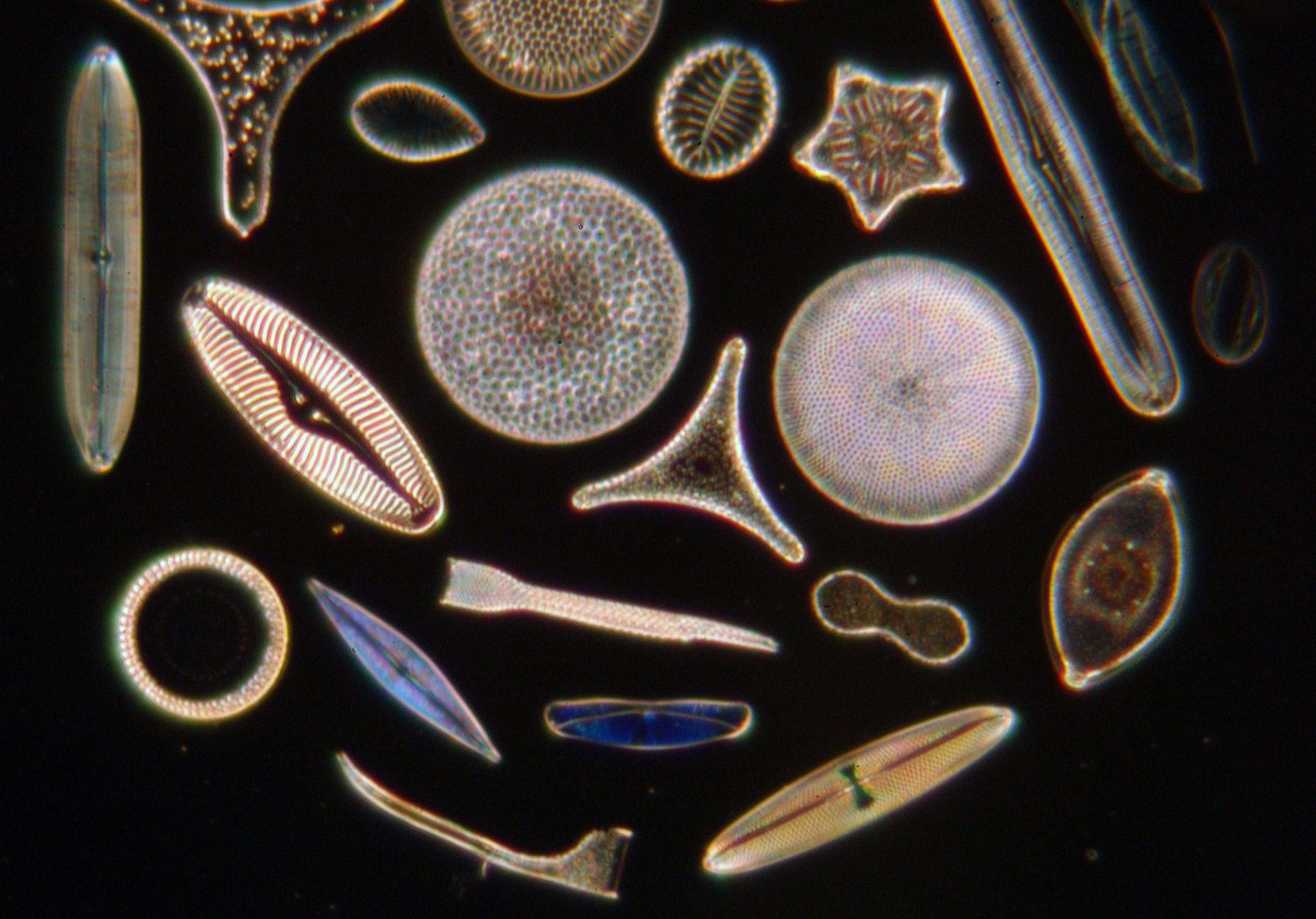 phytoplancton.jpg