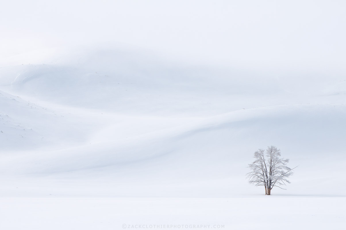"""Copy of """"WINTER'S SILENCE"""""""