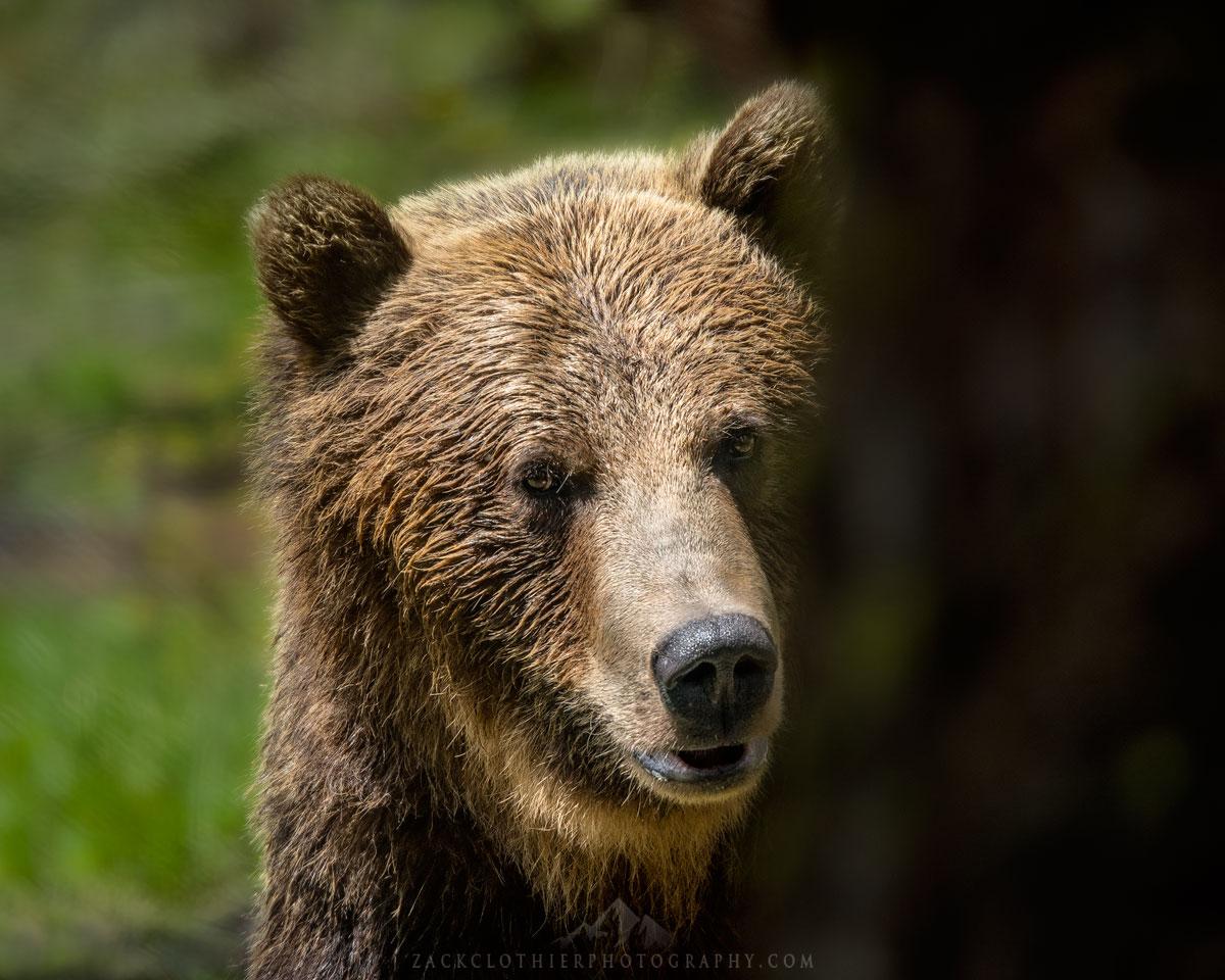 Hey-Bear.jpg