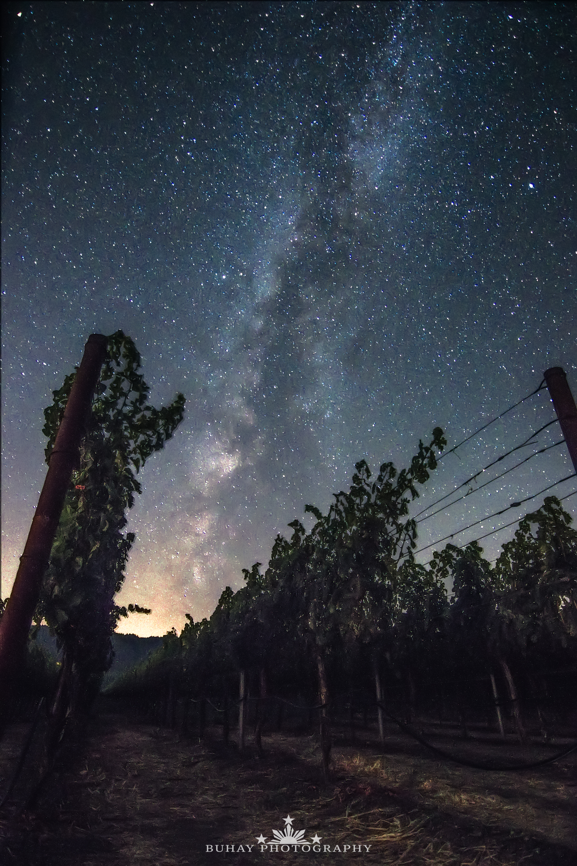 Napa Valley Milky Way Over Vineyard