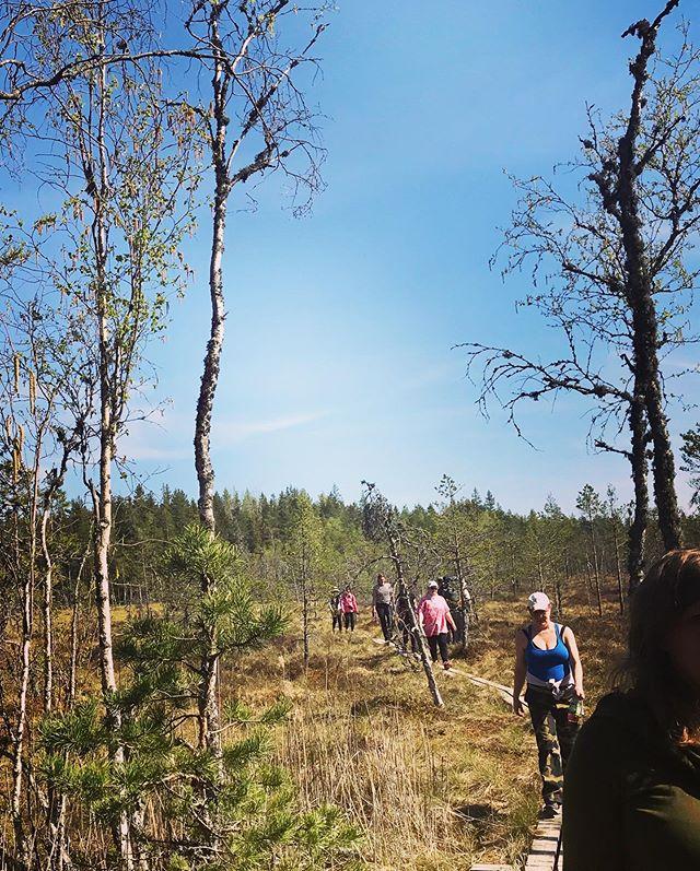 Uskomattoman hieno Luontolaulu-päivä Kurjenrahkan kansallispuistossa. Hyräilevän ihania laulun hetkiä, oppia ja iloa auringon poltteessa ja ikimetsän suojassa. Kiitos ❤️