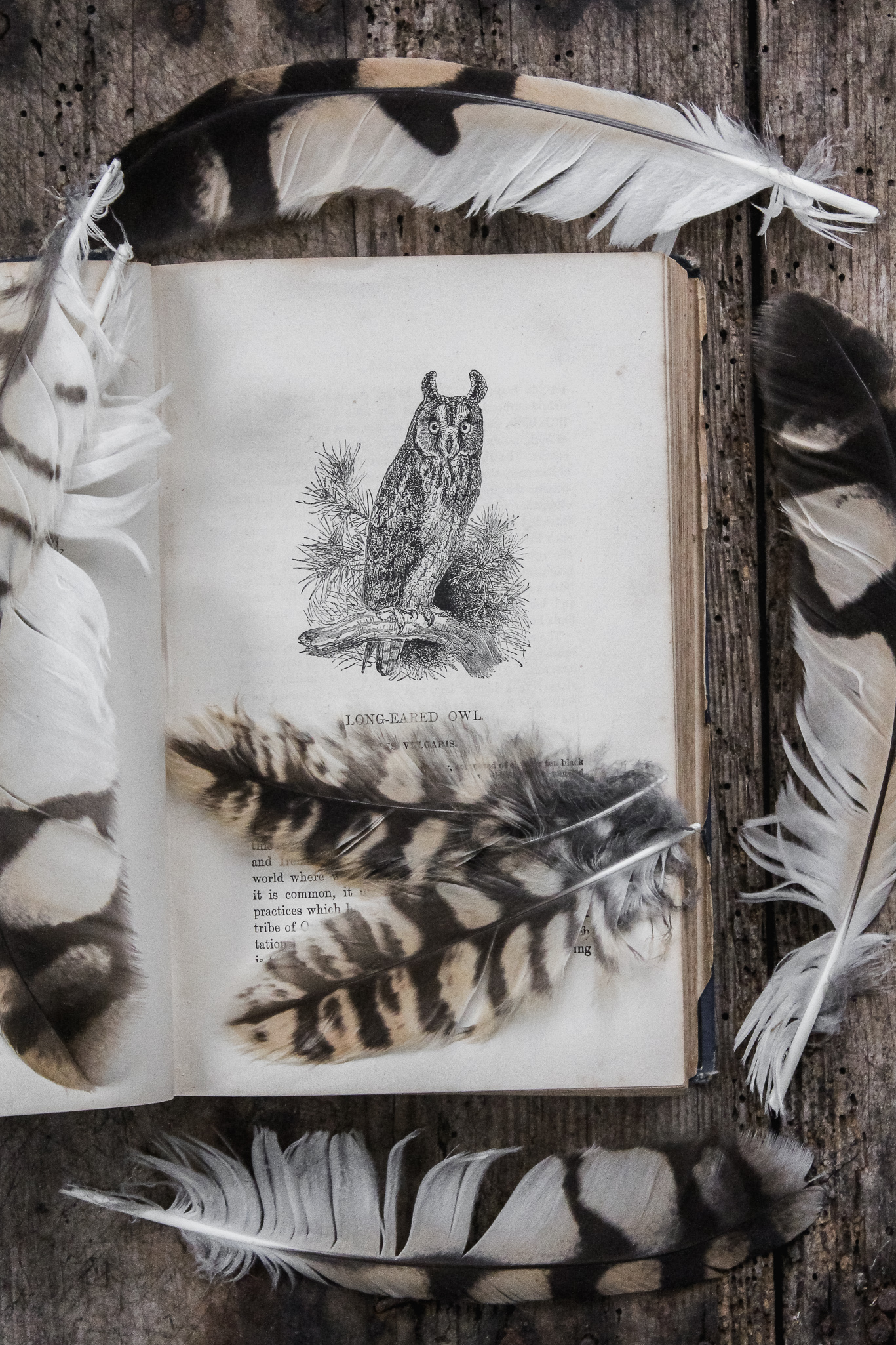 Owl Feathers.jpg