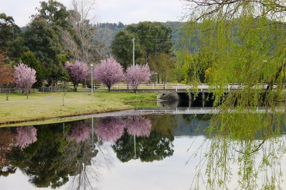 Stanthorpe Spring_04b.jpg