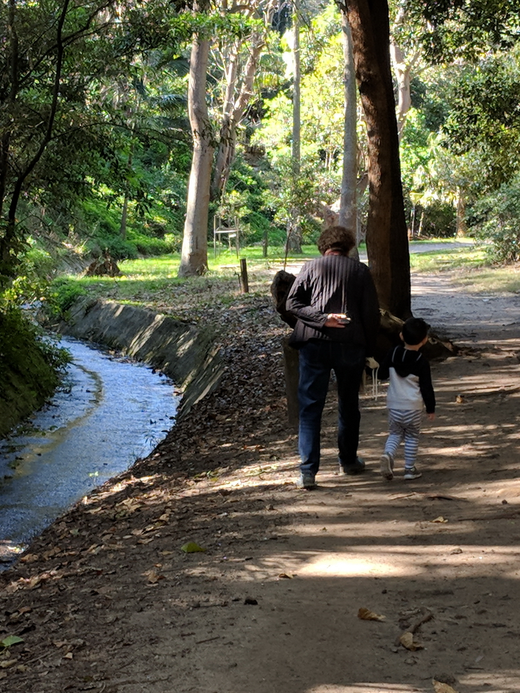 Shallow stream and natural bush in Bronte Park - just upstream from Bronte Beach playground