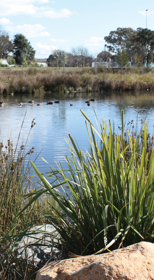 Dickson_Ponds_9-urban-ponds-canberra.png