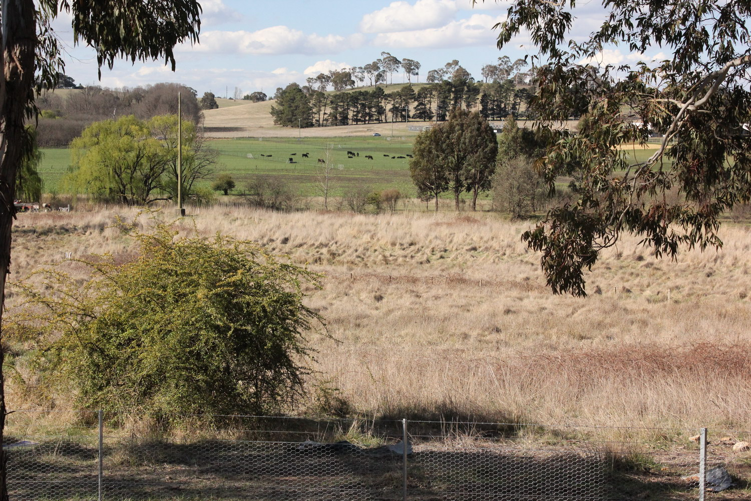 View over Dumaresq Creek