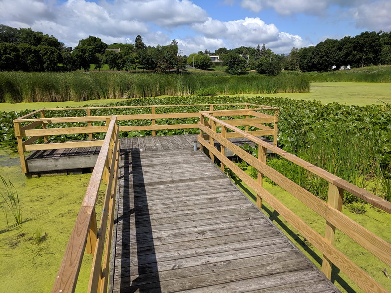 A viewing platform over a nutrient filtering wetland