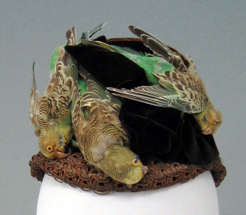 Etta Lemon Bird hat.jpeg