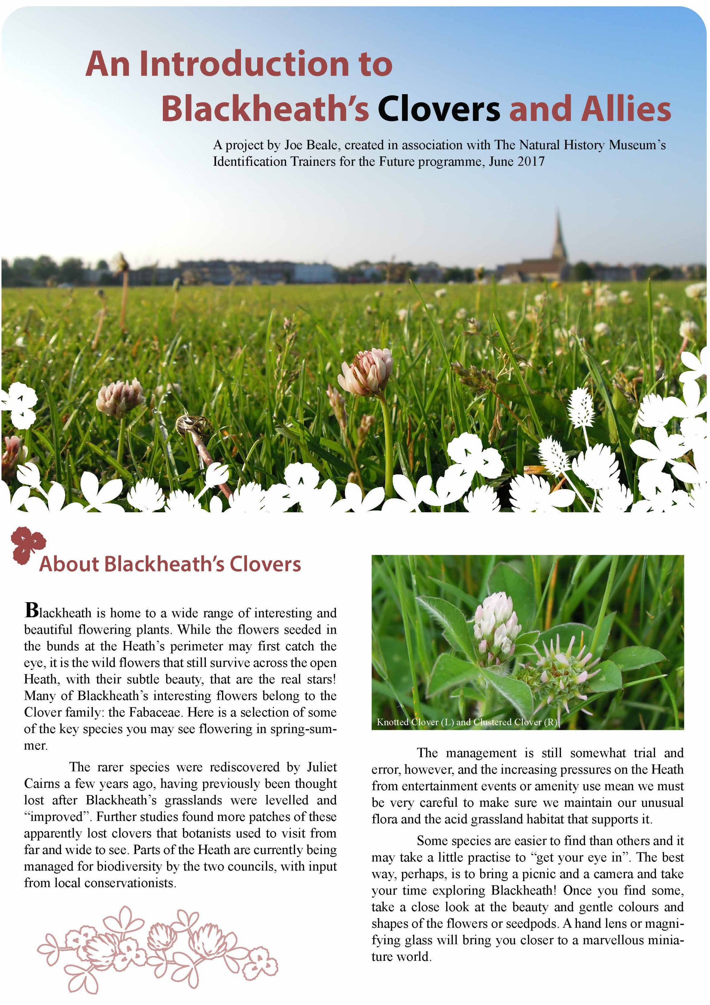 An Introduction to Blackheaths Clovers and Allies Joe Beale 1.jpg