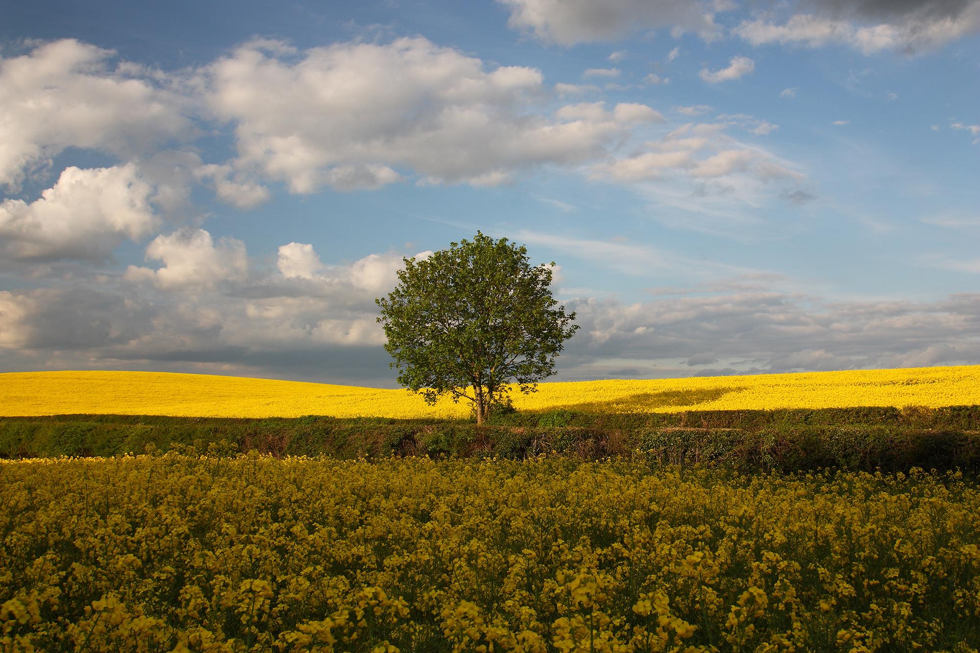 tree_yellow_3.jpg