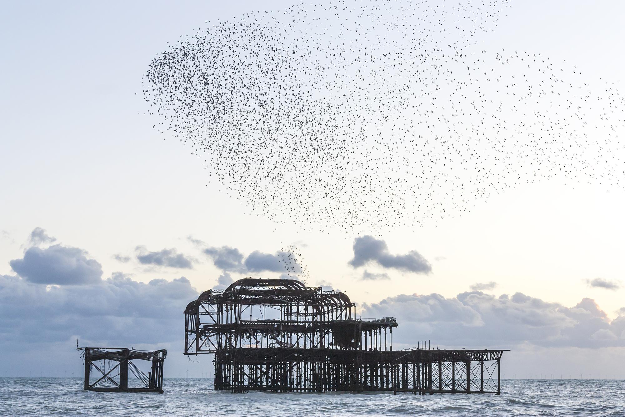 brighton starlings.jpg