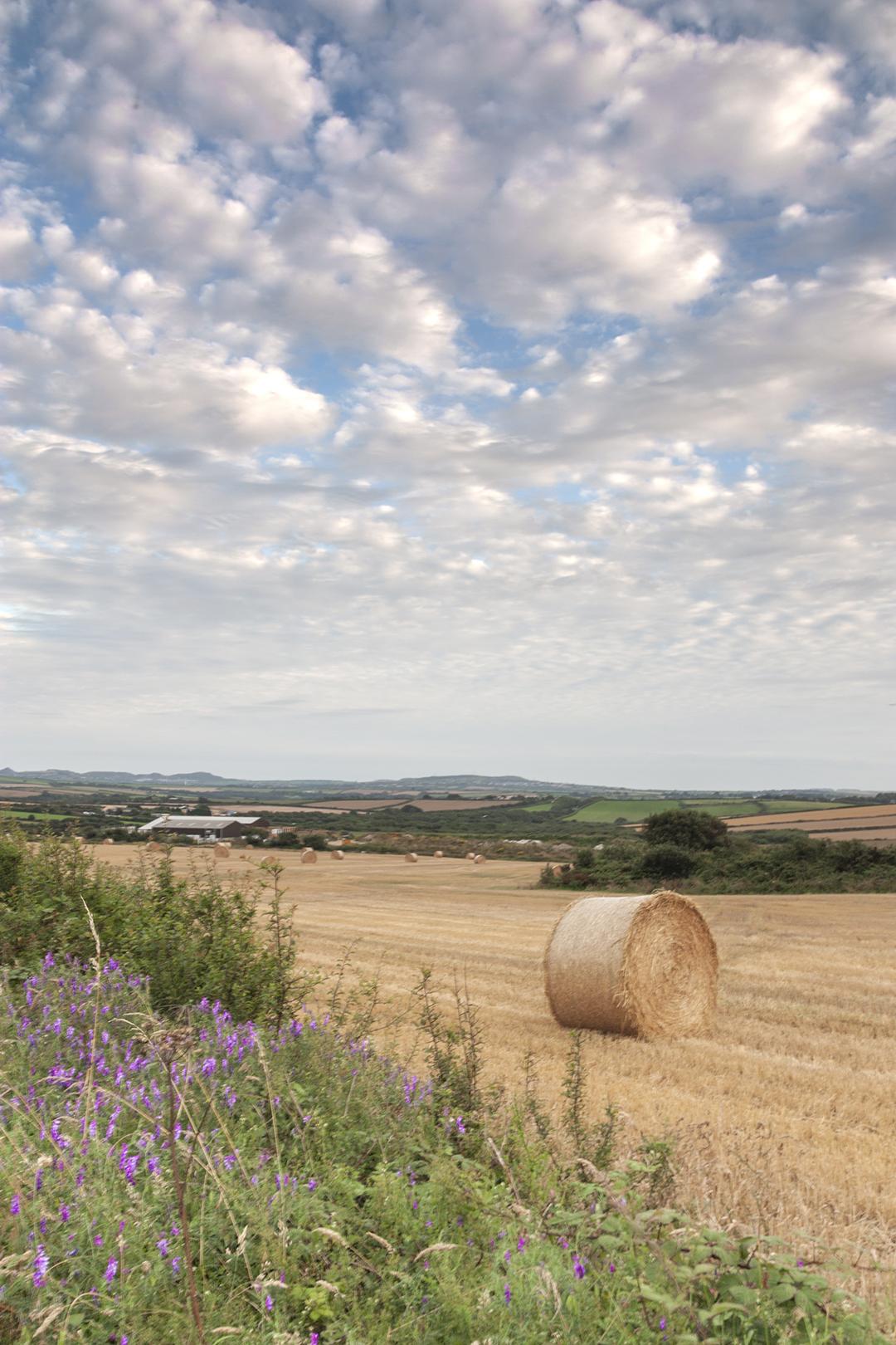 cornwall wheat field.jpg