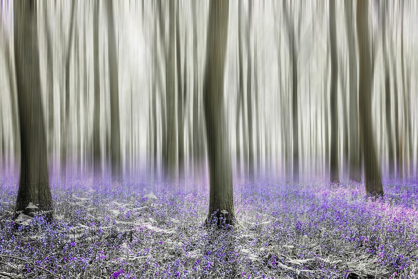 bluebell woods_2018_12.jpg