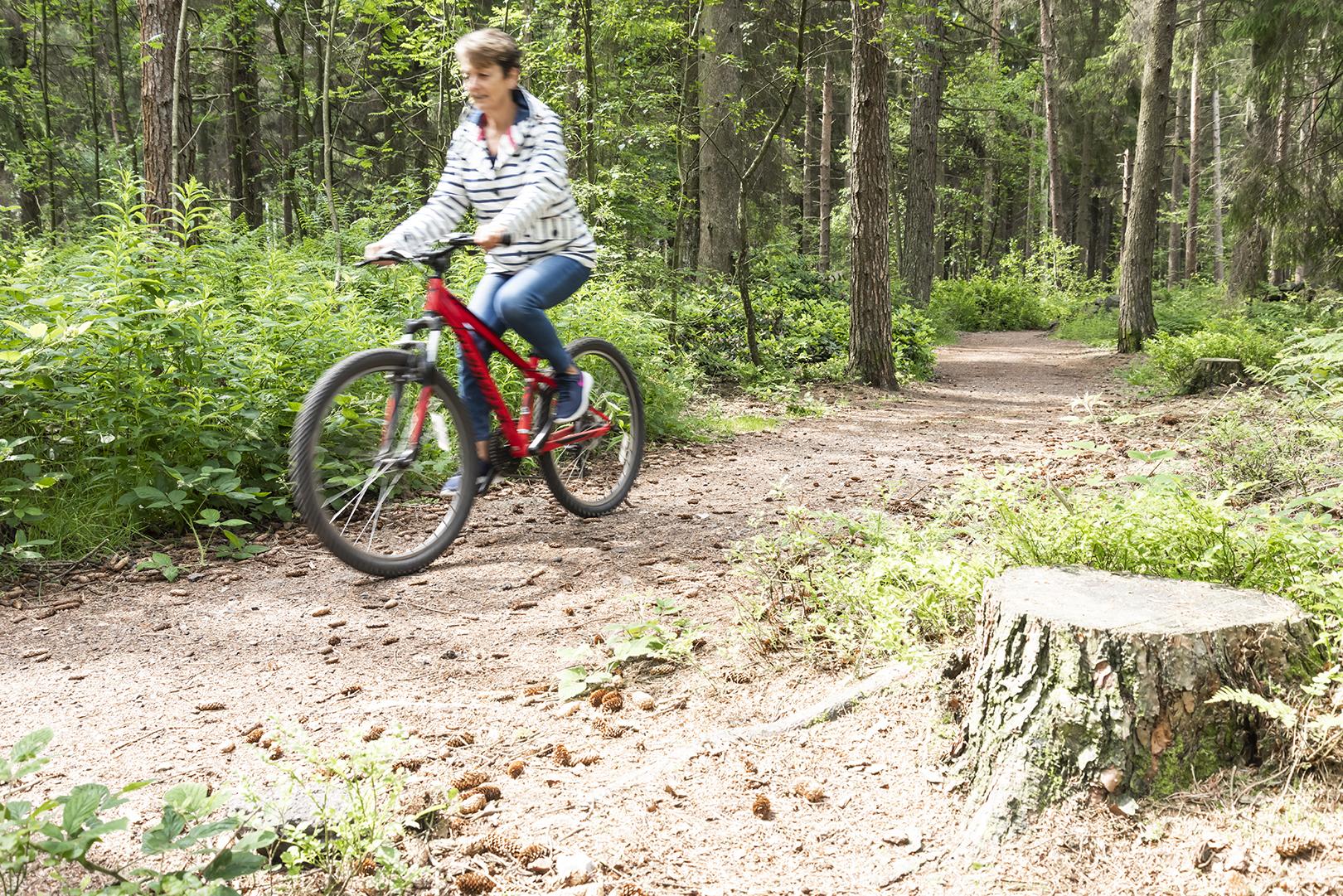 darwin forest bike ride.jpg