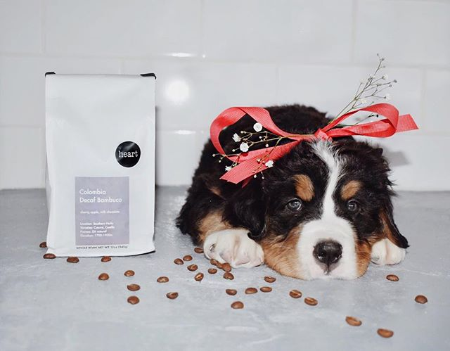 The only thing on my wish list: it's perfect, the full package, and just the right amount of sweet... Oh and the puppy too. Happy Holidays from our family to yours!!