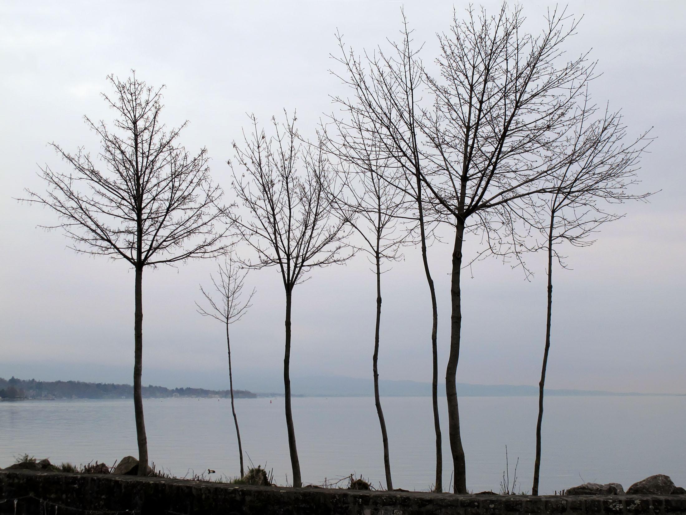 Winter trees - Lake Geneva, Switzerland
