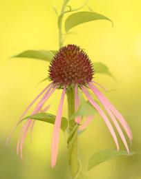 blurred-background-flower.jpg