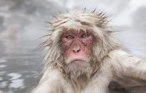 snow-monkey_w2o2841-e1474501379917.jpg