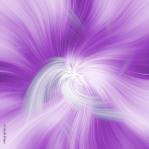 purple-white-felege_4x4.jpg