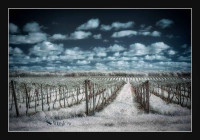 winslow_infrared-vines.jpg
