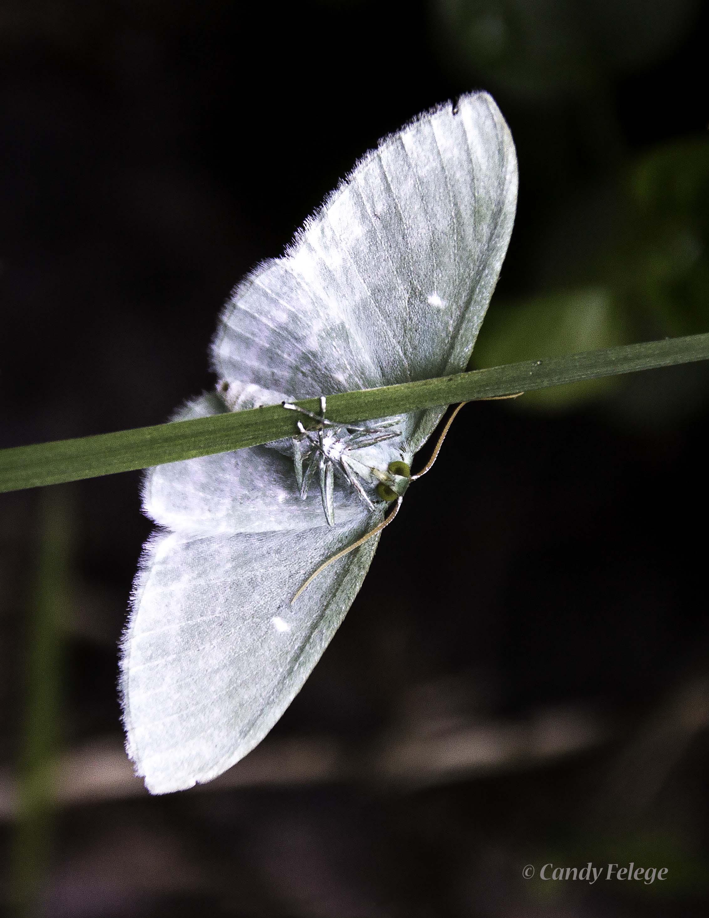 moth_Felege.jpg