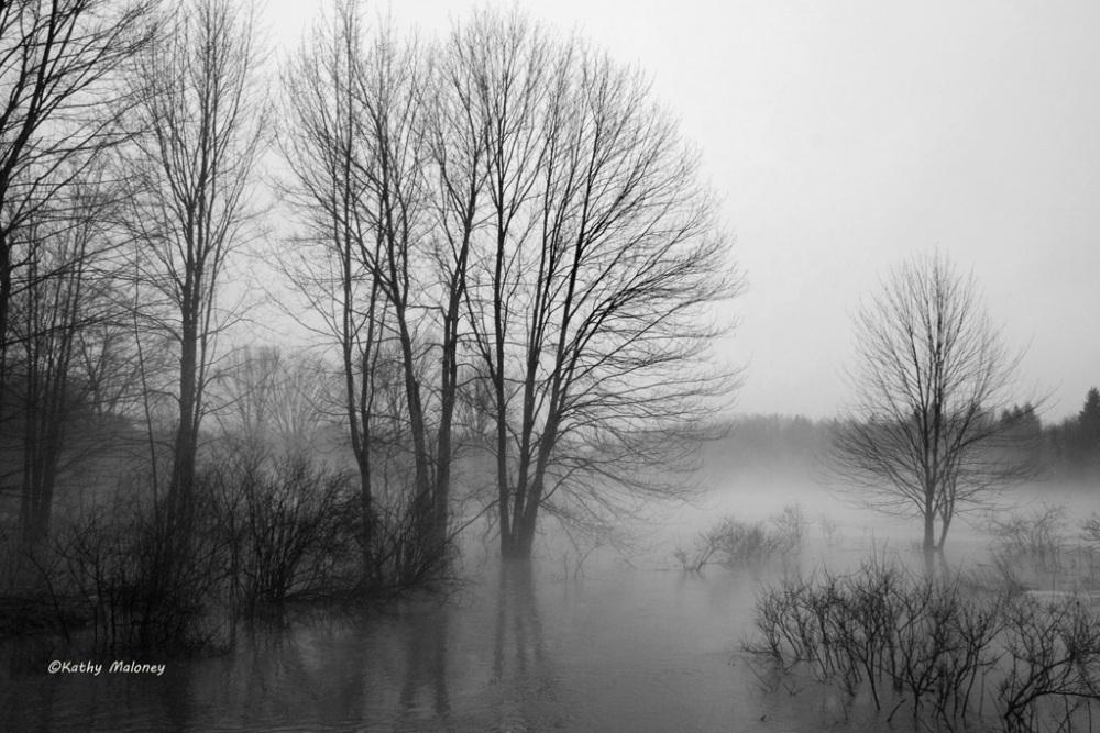 foggy-day