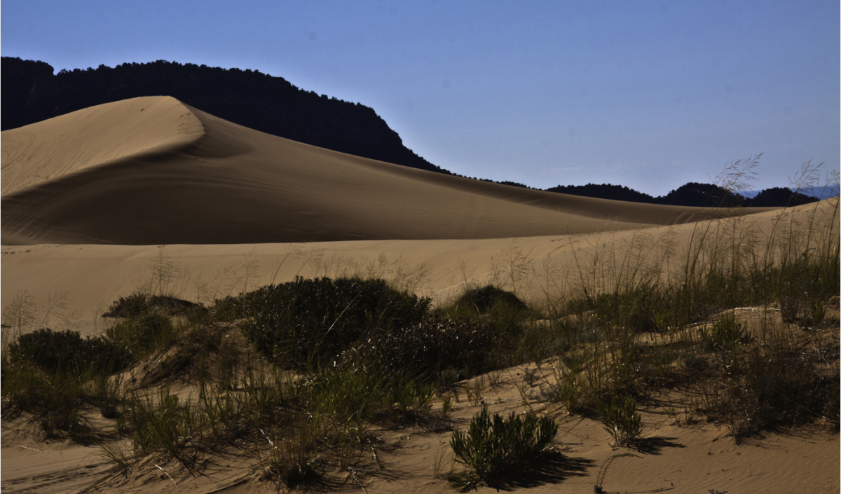 coral-sand-dunes