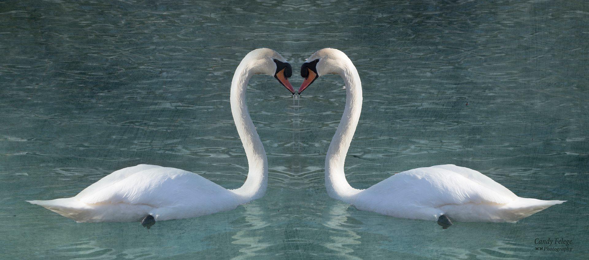 """Double Swan"""
