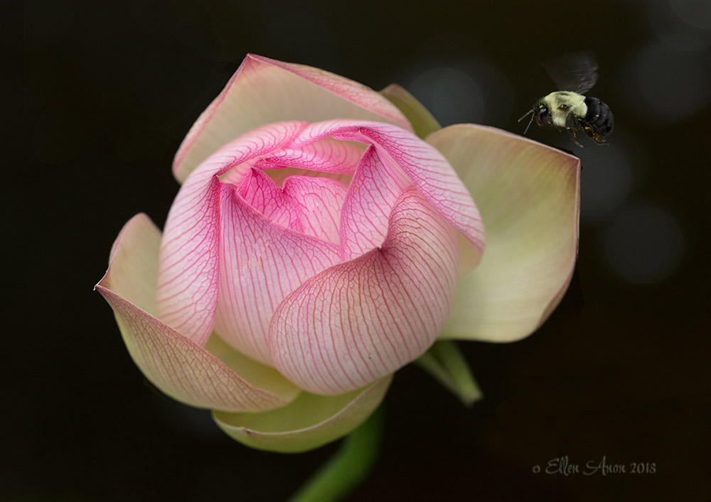 EAnon_Lotus_92A0435-Edit.jpg