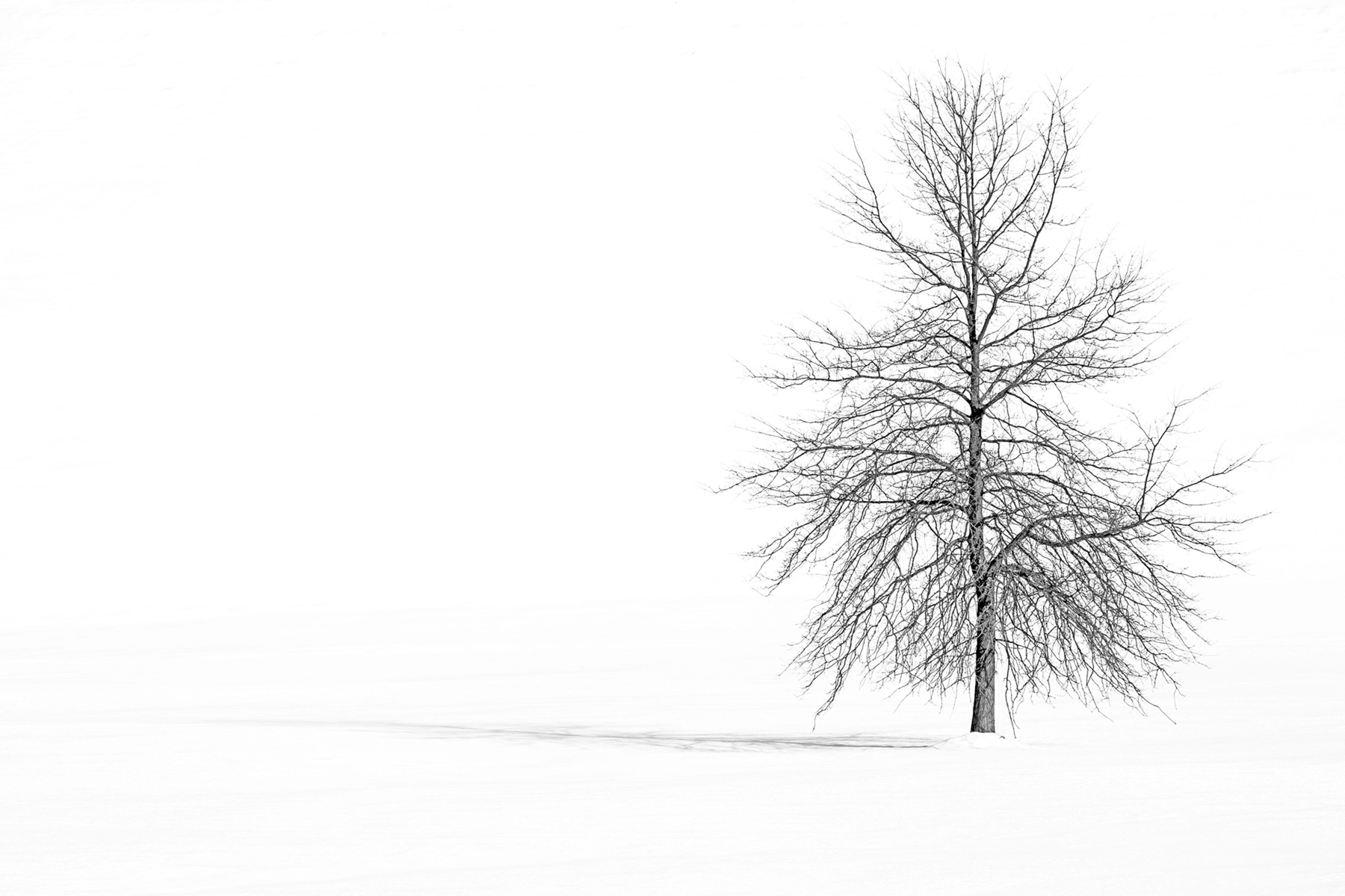 Gilson_Pin Oak in Winter 3720.jpg