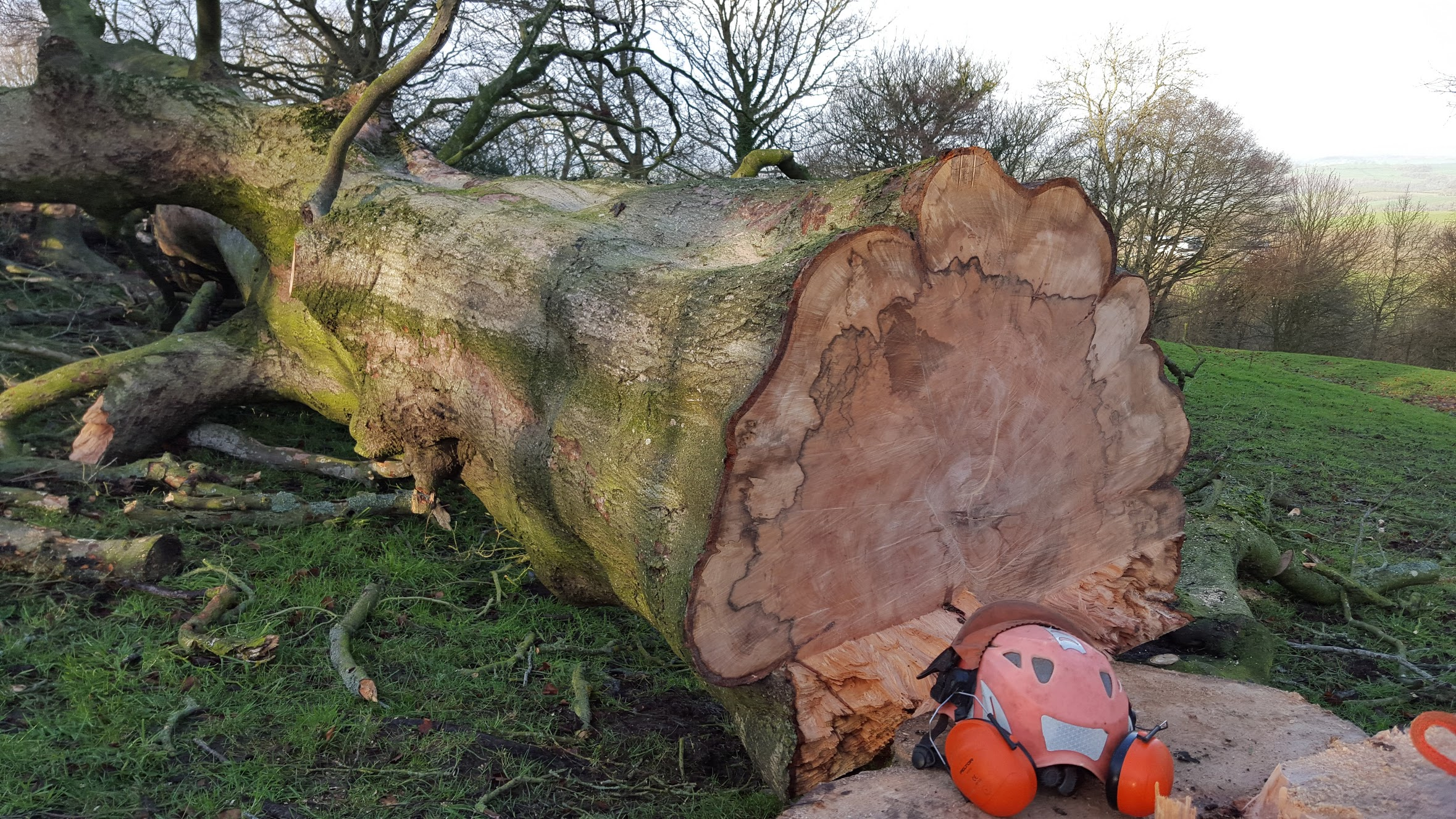 Sadly our favourite tree, a 378 year old beech died back in 2014