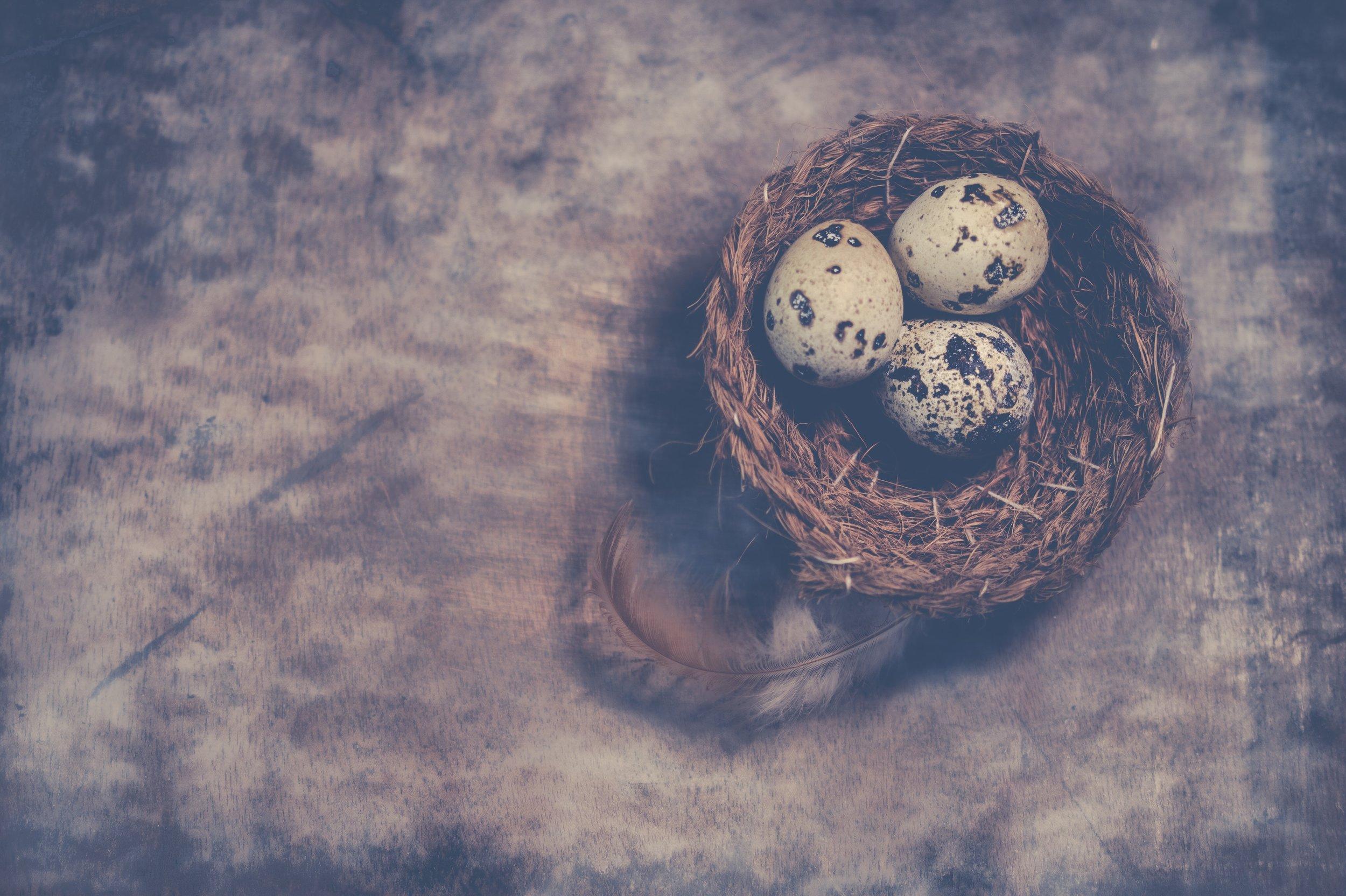 bird-nest-close-up-eggs-810320.jpg