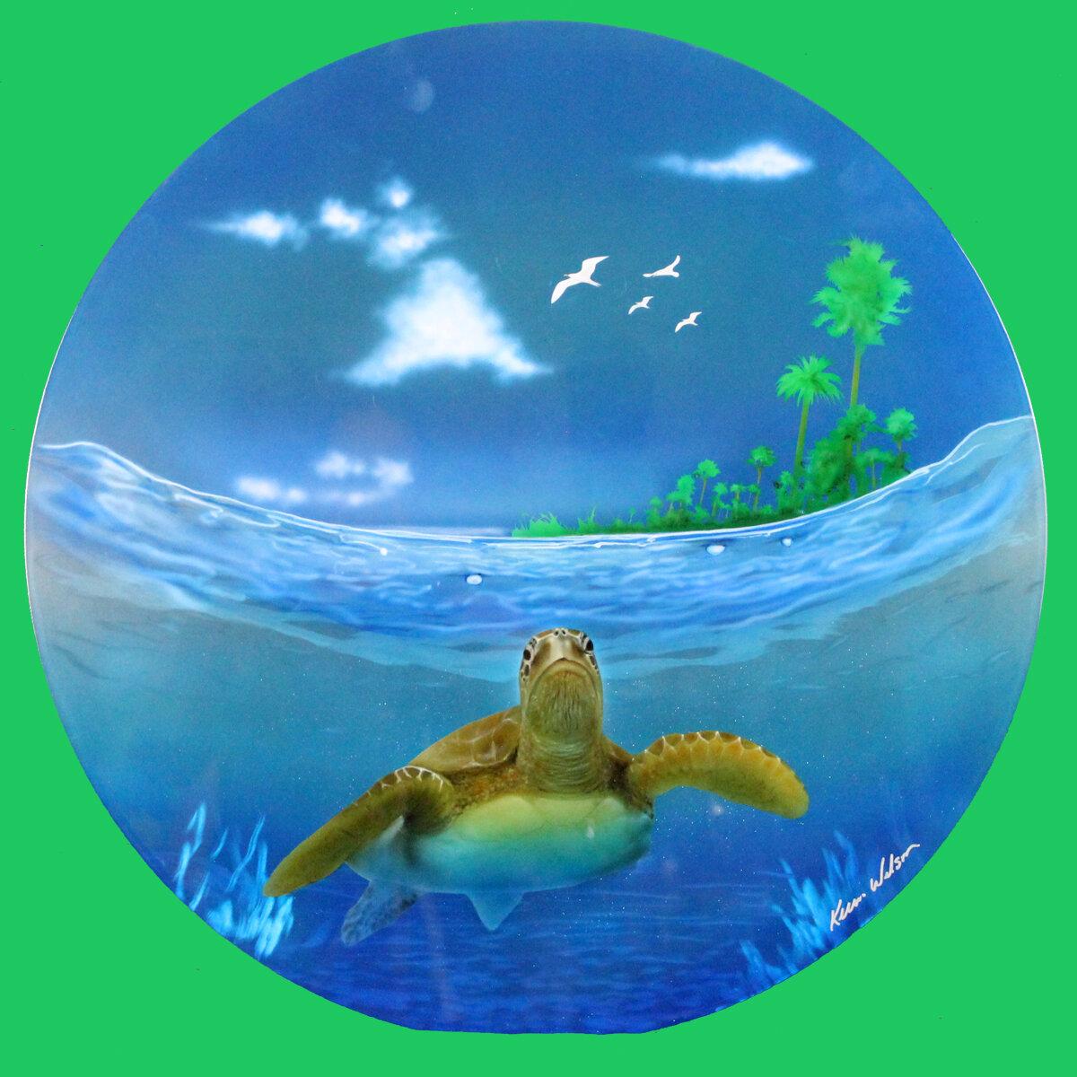 Turtle Through the Lens