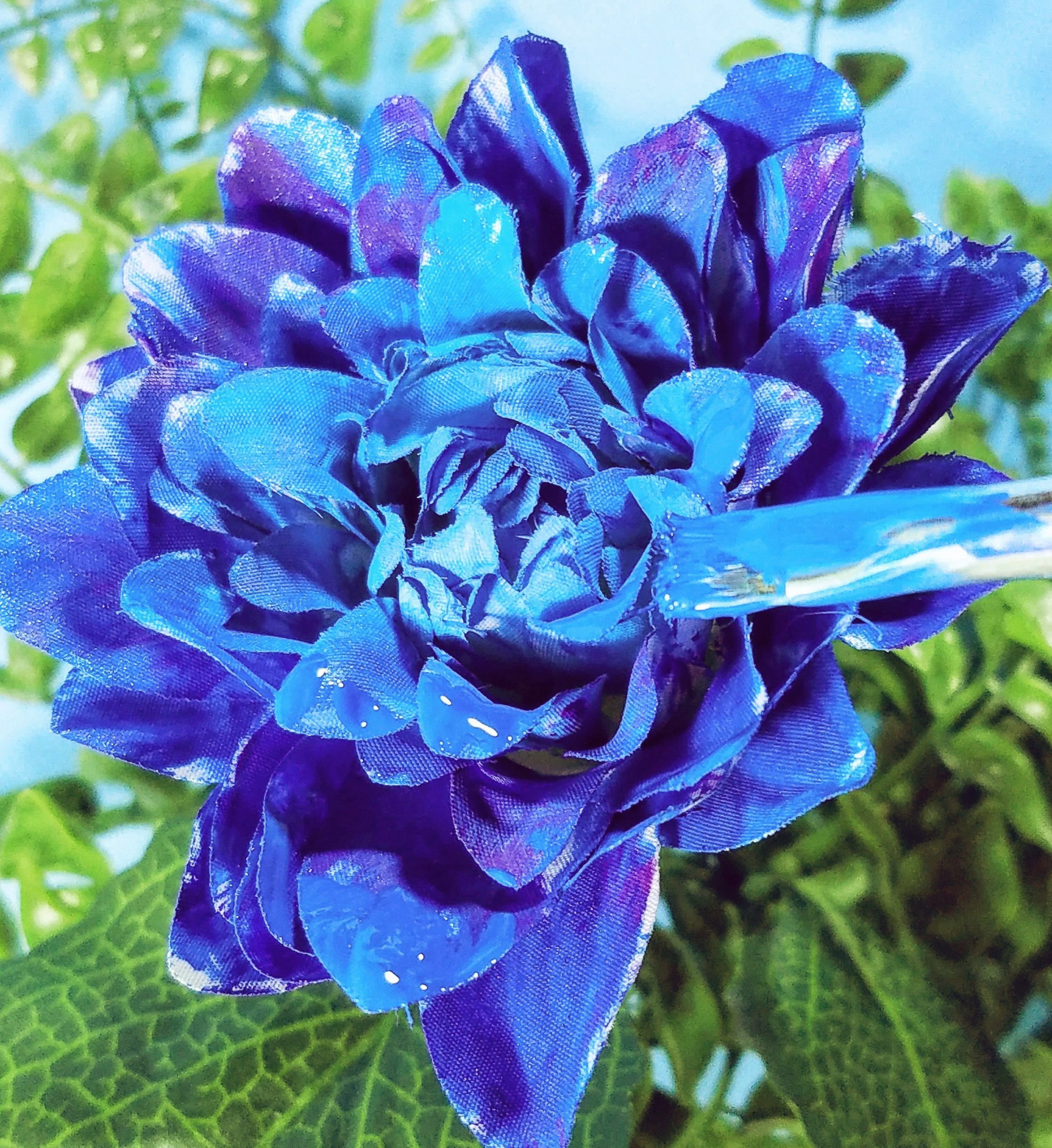 Blue dahlia should exist!