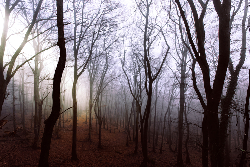misty-and-mysterious-forest-trees_800.jpg