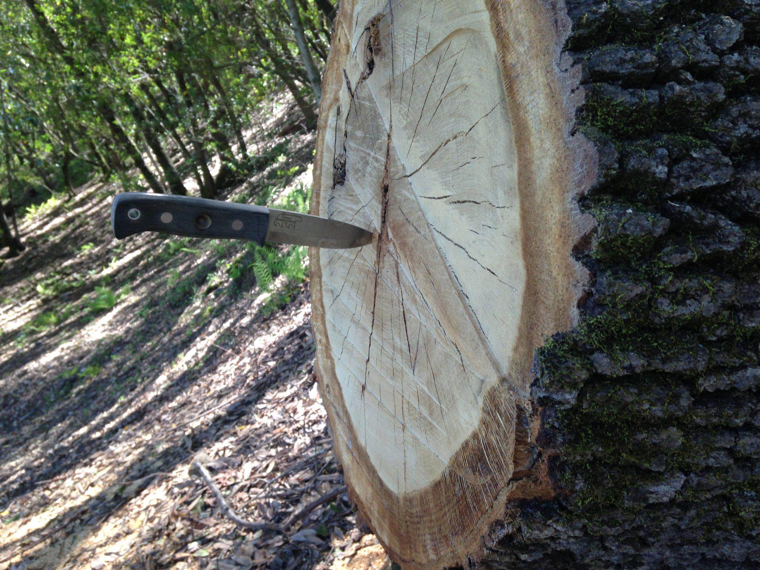 WoodBear Knife
