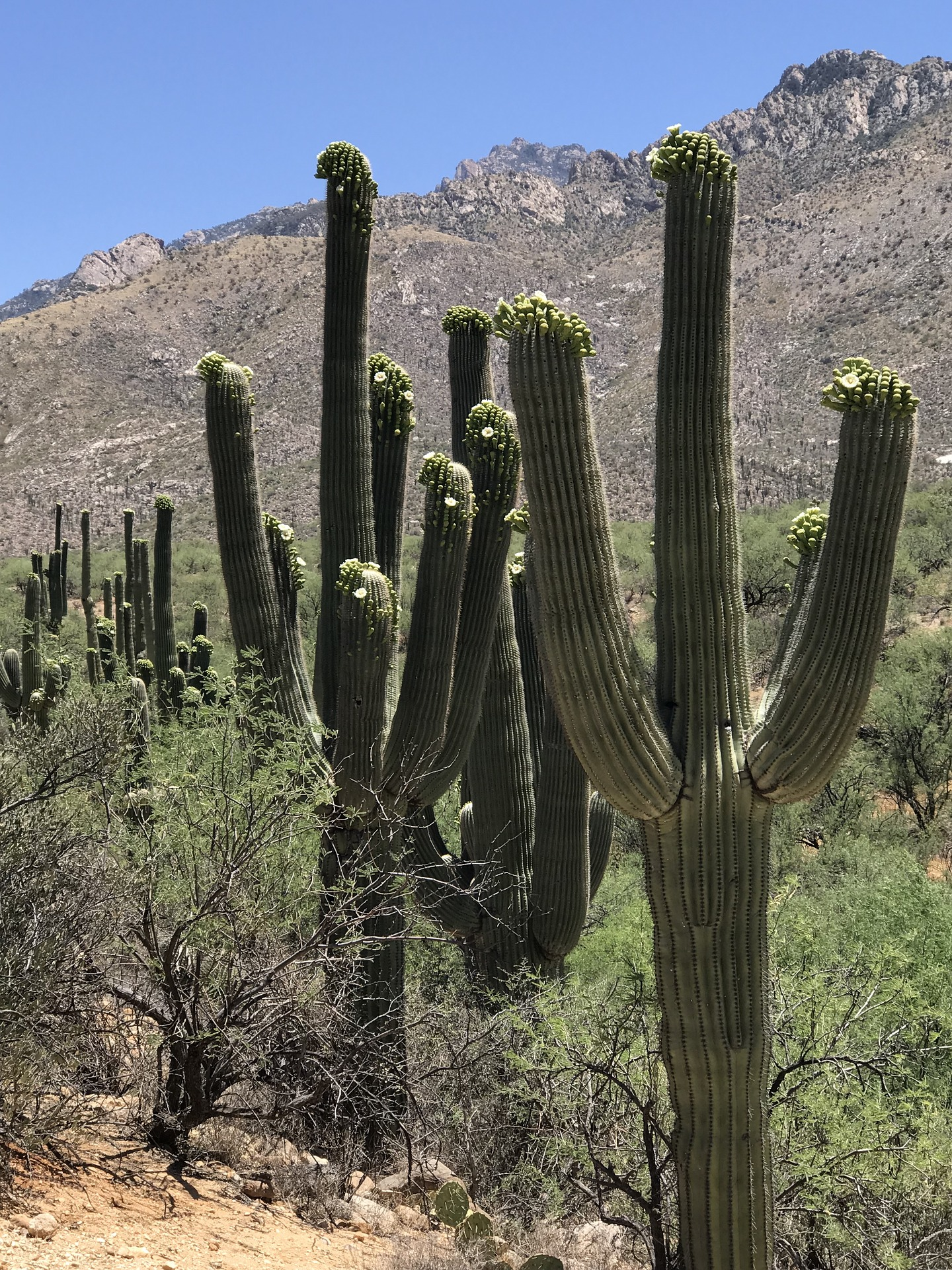 tucson-mountain-park.jpg